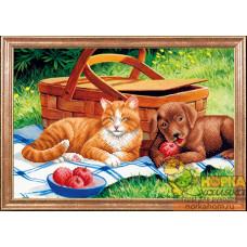 Дружба на пикнике