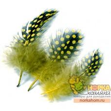 Перья цесарки (болотный)