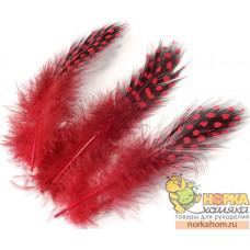 Перья цесарки (красный)