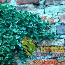 """Бумага для скрапбукинга """"Растение на кирпичной стене"""""""