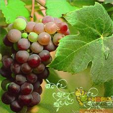 """Салфетка для декупажа """"Красный виноград"""""""