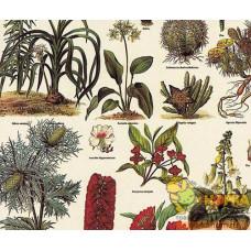 """Декупажная карта """"Лесные растения"""""""