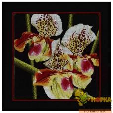 Орхидеи. Пафиопедилум