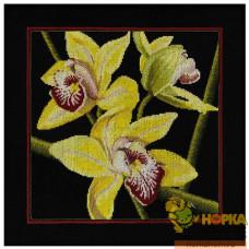 Орхидеи. Цимбидиум