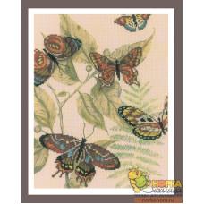 Царство бабочек I