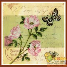 Почтовая открытка - Шиповник