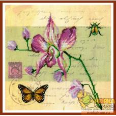 Почтовая открытка - Орхидея